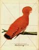 Thumbnail Vintage Bird