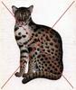 Thumbnail Cat Vintage