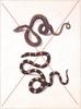 Thumbnail Vintage Snakes