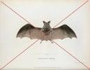 Thumbnail Vintage Bat