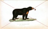 Thumbnail Vintage Bear